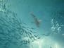 Urlaub Medhufushi